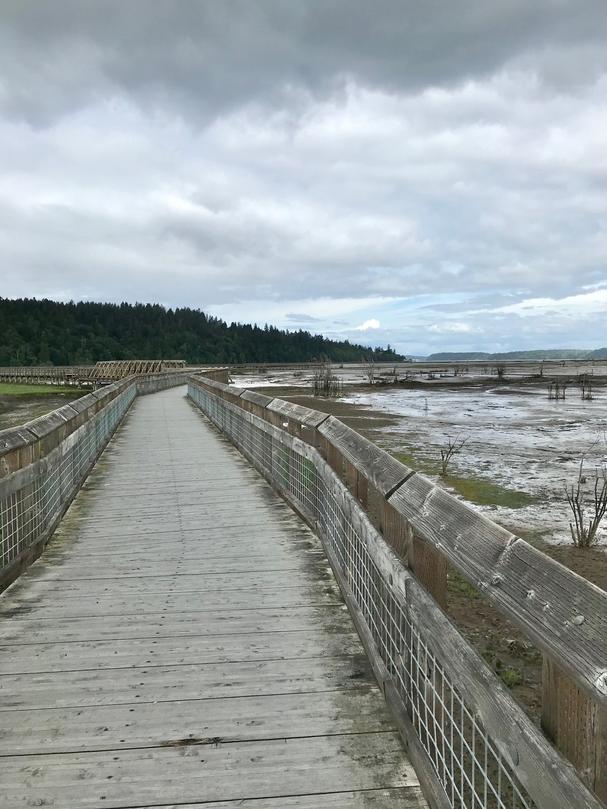 Nisqually Estuary Boardwalk