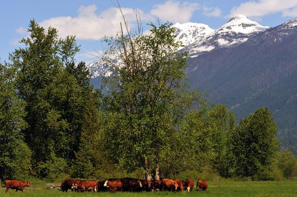 Pemberton Meadows Beef