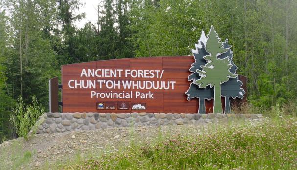 Chun T'Oh whudujut Ancient Forest, British Columbia
