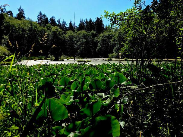 Earth Sanctuary bog