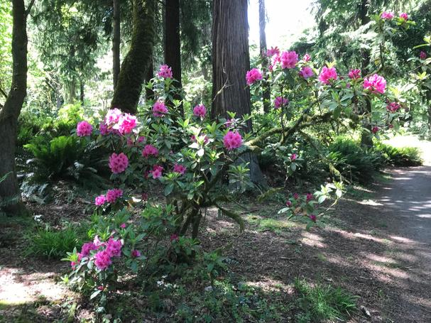 Point Defiance Park, tacoma