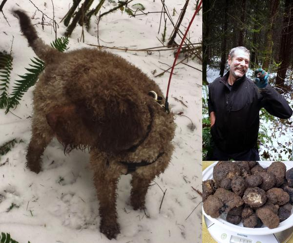 Washington Black Truffle Hunting
