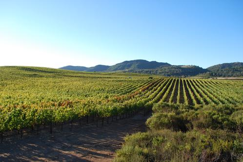animo vineyard