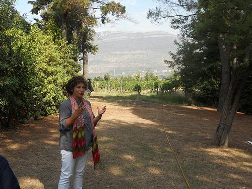 vineyards views campania italy wine montevetrano