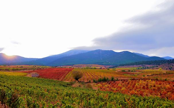 Grandes Vinos vineyards
