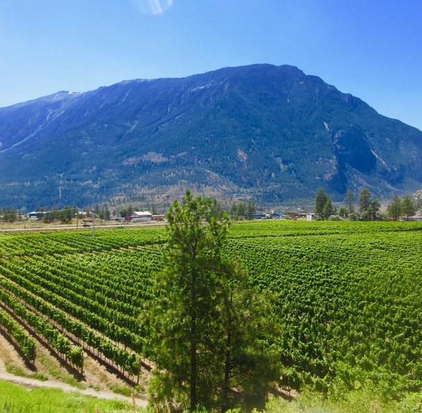 Fort Berens Winery