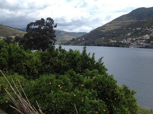 porgual douro old port oranges
