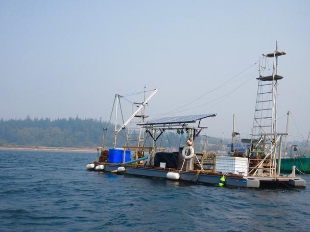 Goosepoint ferry
