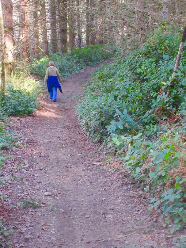 Carbonado hiking trail