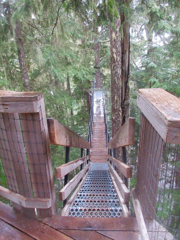 Ziptrek Ecotours suspension bridge