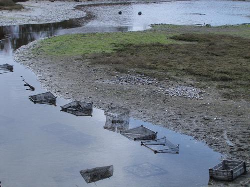Sweetwater Shellfish Farms Lagoon
