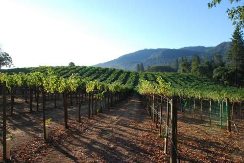 oso vineyard